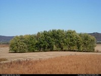 Group of trees standing in the middle of farm lands.