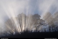 Sunbeams shining through the trees and lifting fog.