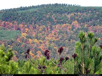 Oklahoma, Changing leaves among the pine forests of the Kiamichi Mountains in Southeast Oklahoma