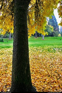 Oregon, Beautiful fall colors at Riverside Park in Grants Pass, Oregon.