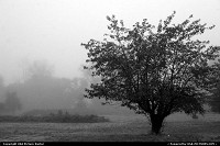 Photo by RhondaRogalski | Grants Pass  mist, fog, apple, tree, silence, alone, quiet, tranquil