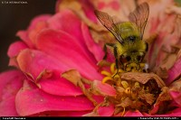 Photo by tiascapes | Portland  bee, flower, nature