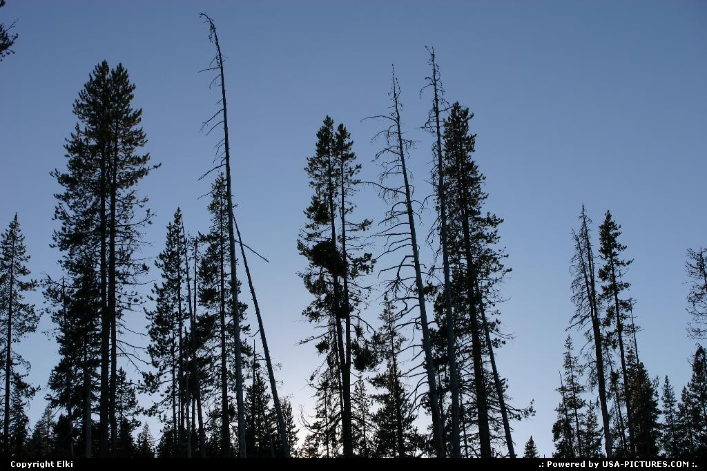 Picture by elki:OregonCrater Laketree