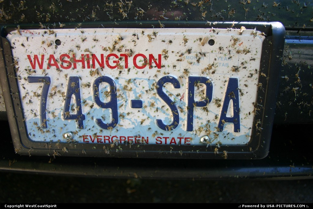 Picture by WestCoastSpirit: Not in a city Oregon   car, licence, plate, bugs