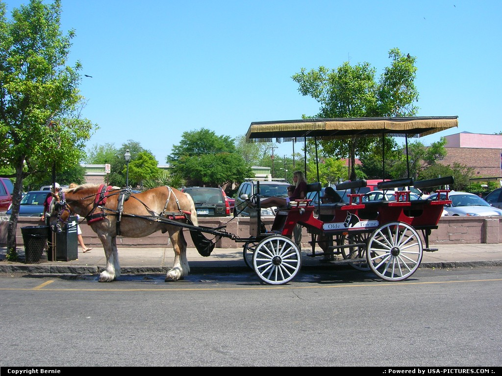 Picture by Bernie: Charleston South-carolina   horse, wagon, visiting