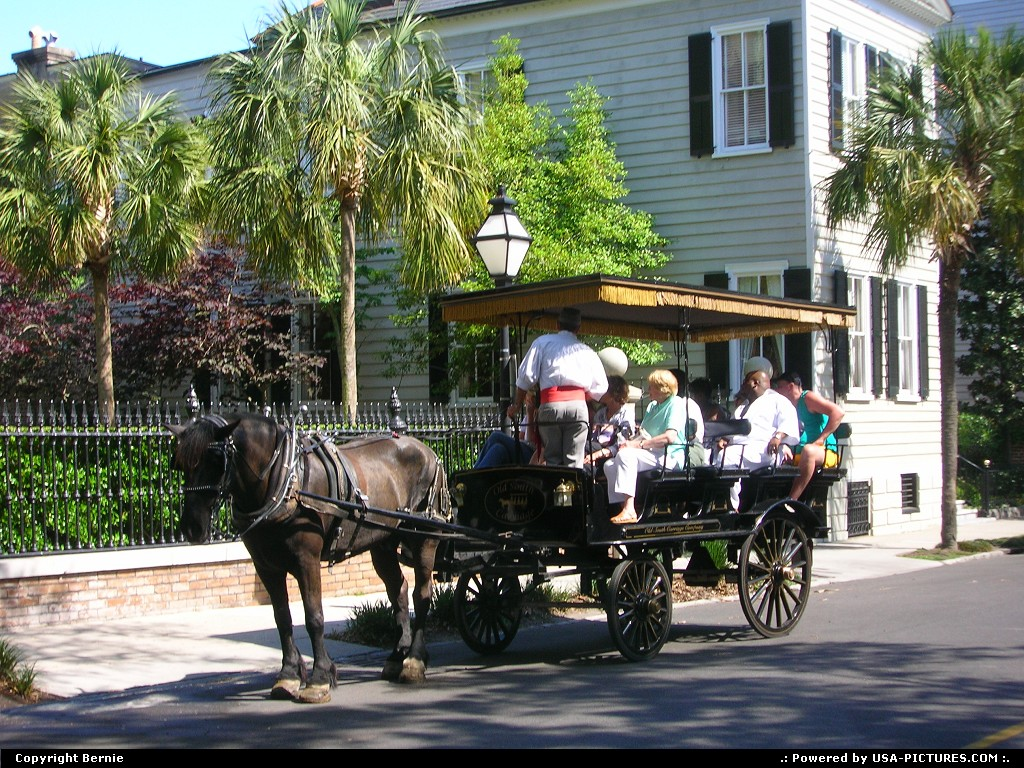 Picture by Bernie:CharlestonSouth-carolinahorse, wagon, visiting