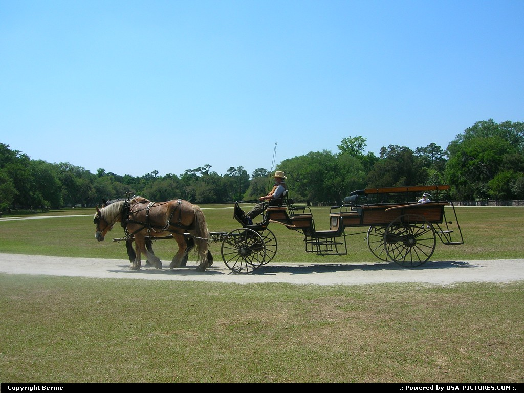 Picture by Bernie: Charleston South-carolina   plantation, horse, wagon