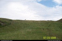 SD Custer Park deer on hilltop