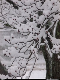, Knoxville, TN, snow in Knoxville 1-17-2013