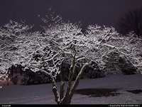 , Knoxville, TN, Flash effect on he snow 1-17-13