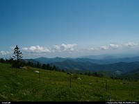 Roan Mountain : Round Bald