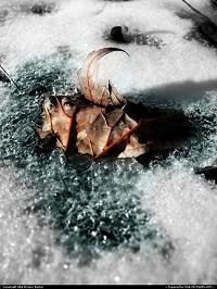 Roan Mountain : Frozen In Time