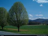 , Watauga, TN, love the tree