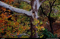 , Austin, TX, Fall foliage in Austin, TX