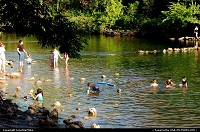 Barking Springs. Barton Creek Pool pool is located between two dams. Beyond the eastern, downstream dam is an area called