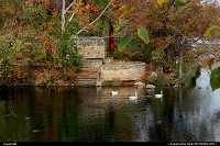 , Austin, TX, Swans on Barton Creek