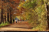 , Austin, TX, Fall foliage along the Lady Bird Hike & Bike Trail
