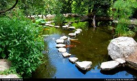 Photo by LoneStarMike | Austin  park, garden, pond, koi, fish