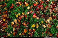 , Austin, TX, Autumn leaves