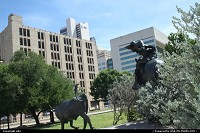 Cowboy take a look to his bull's. Sculture dallas