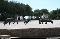 The Mustangs of Las Colinas. Irving, Texas. Such a nice and huge bronze sculture!