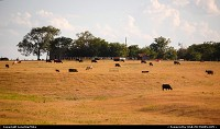 Photo by LoneStarMike | Not in a City  rural, cattle, farm, ranch,