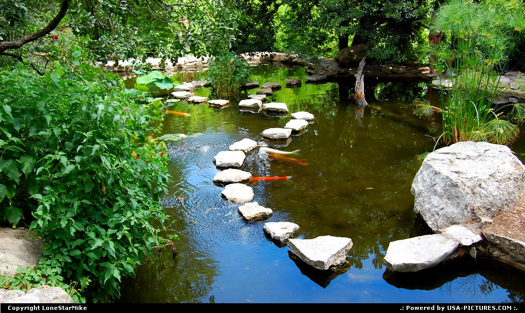 Picture by LoneStarMike: Austin Texas   park, garden, pond, koi, fish