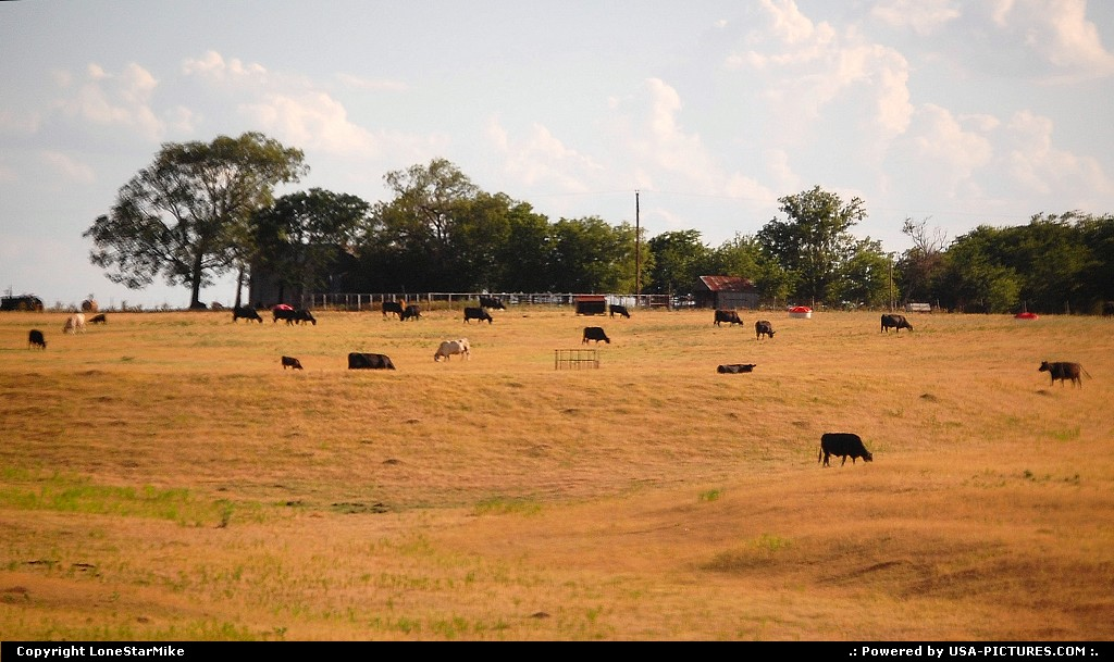 Picture by LoneStarMike:Not in a CityTexasrural, cattle, farm, ranch,