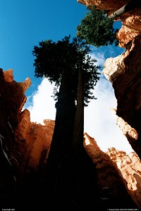 Trees within the canyon