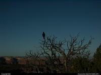 Photo by elki |  Canyonlands raven, wilderness