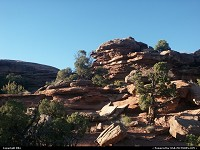 Photo by elki |  Canyonlands rocks, trees