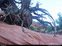 Photo by elki |  Canyonlands erosion, rock
