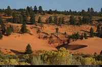 Not in a City : Coral Pink Sand Dunes state park...