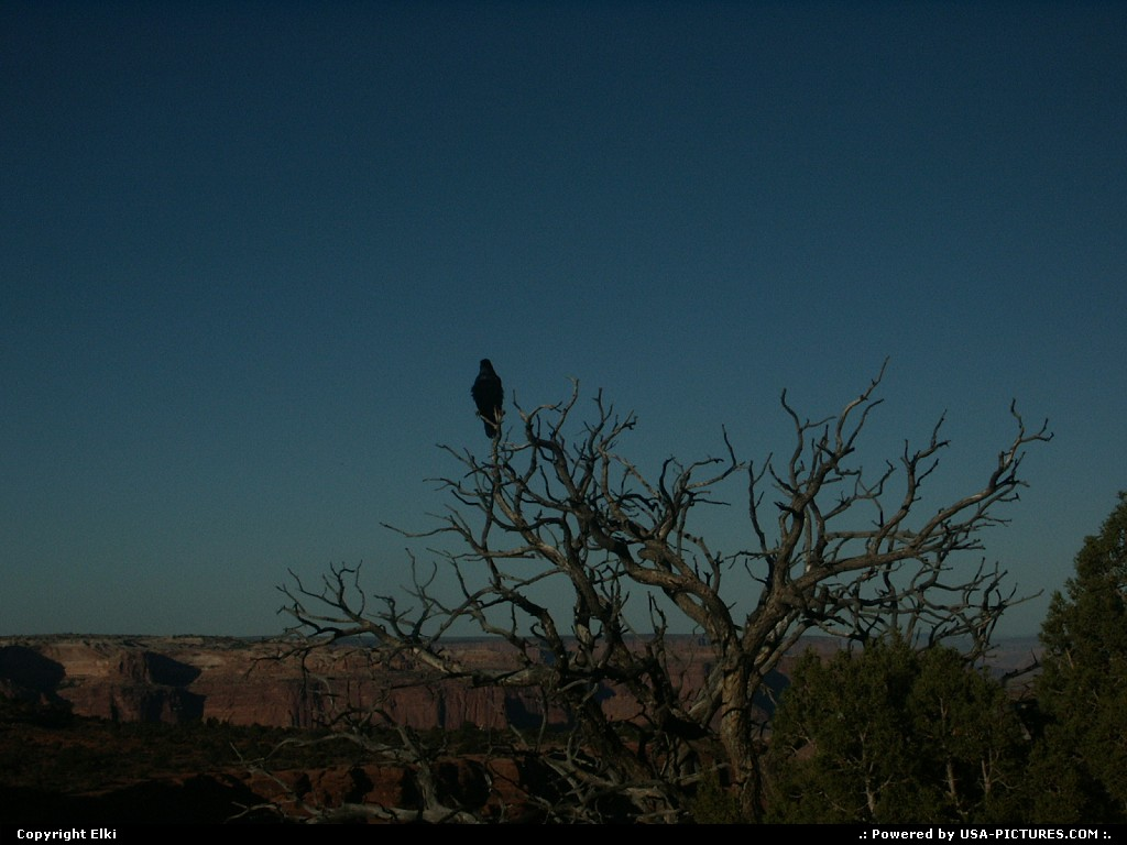Picture by elki:  Utah Canyonlands  raven, wilderness