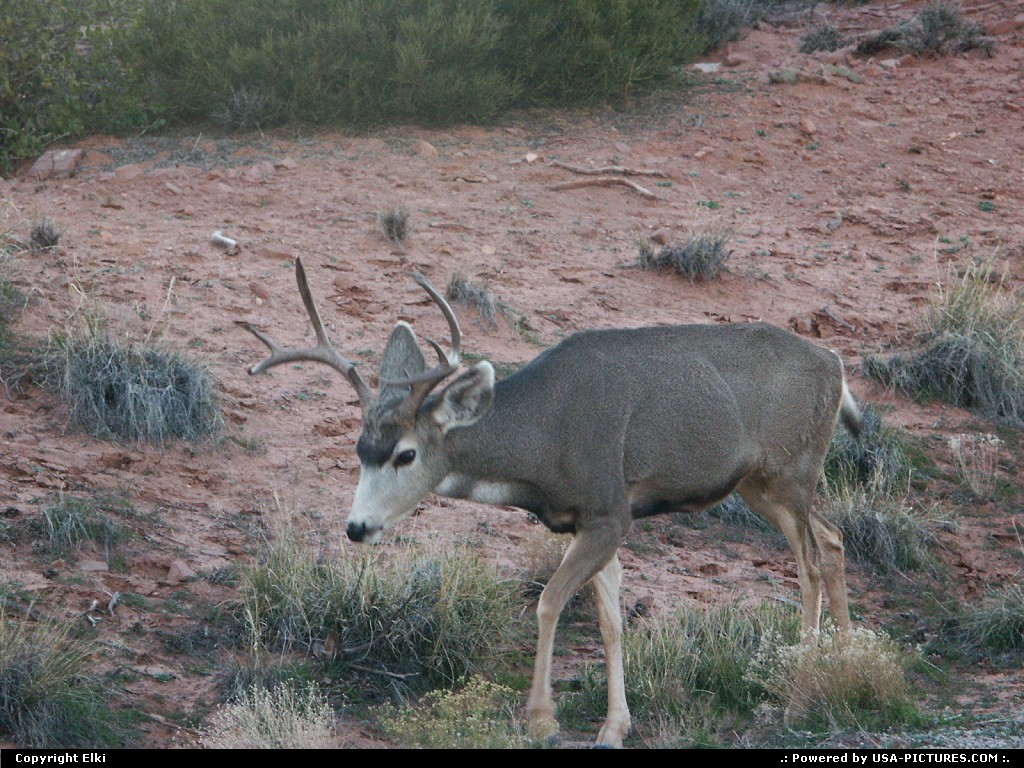 Picture by elki:  Utah Canyonlands  wildlife