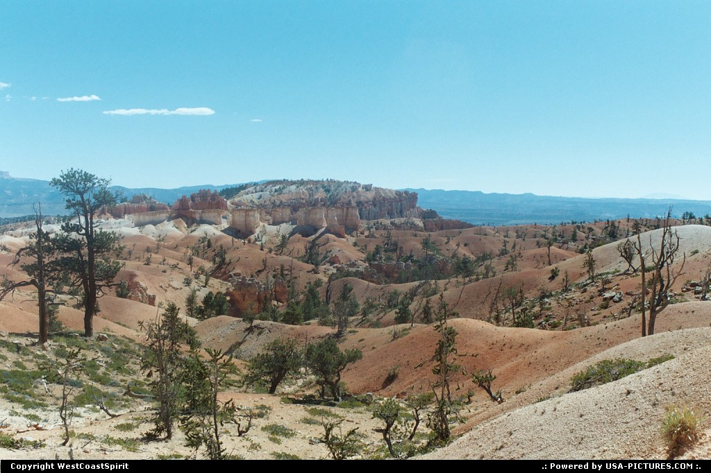 Picture by WestCoastSpirit:  Utah Bryce Canyon  desert, tree, wilderness, canyon