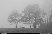 Trees in fog at Beaverdam Park