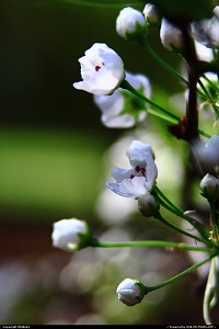Newport News : White blooms