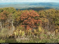 Shenandoah : The Fall is the best time to drive through Shenandoah Valley. We went on the Blue Ridge Parkway which goes through there. And the colors of the trees were just outstanding. It took our breath away.