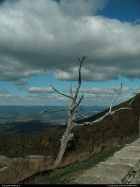 Shenandoah : On the Blue Ridge Parkway once again I came upon a tree that gave a person reason to think. The clouds overhead and the tree just standing with all it's strength that could be seen. It gives a person to thinking and wondering how long this tree had been standing there.