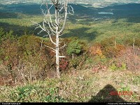 Shenandoah : I had gotten out of the car on the Blue Ridge Parkway and it struck me. Here was all this color around and one lone tree standing there with not one leaf on it. It made me wonder how long that tree had stood there over the test of time.