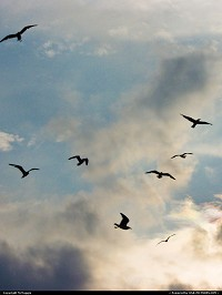 Photo by McMaggie | Virginia Beach  English, seagulls, clouds, sky