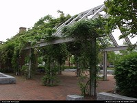Virginia, Wisteria arbor, courtyard, Williamsburg Regional Library, Williamsburg, Virginia.
