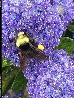 , Seattle, WA, Busy, busy bee !!