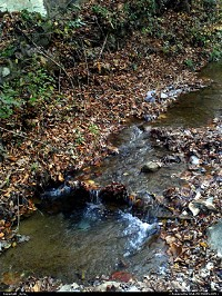Photo by _Kyra_ | Clear Fork  creek, water, crystal, fall, autum