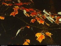 Photo by _Kyra_ | Pineville  fall, autum, leafs, nightview, trees, orange, color
