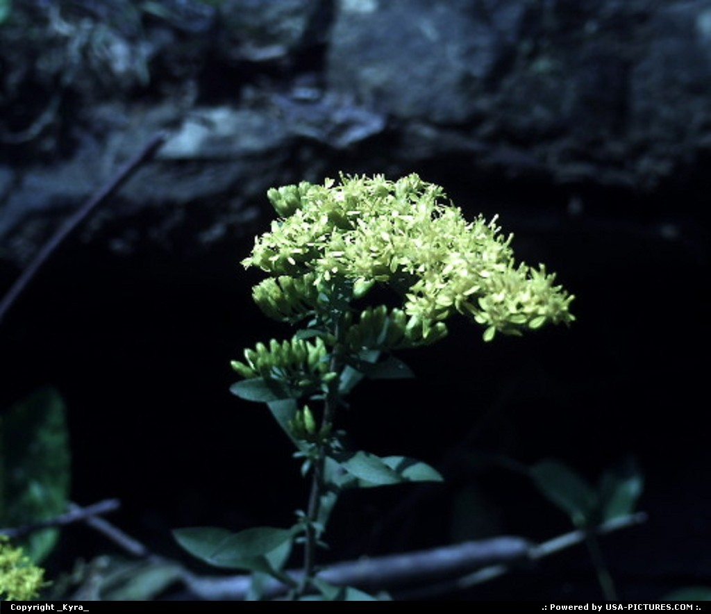 Picture by _Kyra_:Clear ForkW-virginiaflower, fall, yellow, mountain