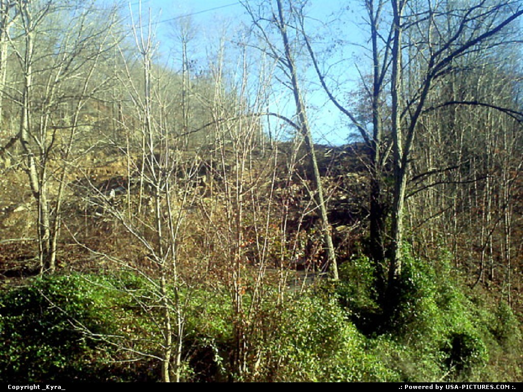 Picture by _Kyra_:JusticeW-virginiatrees, treen, mountain, fall, autum, leaves, leaf