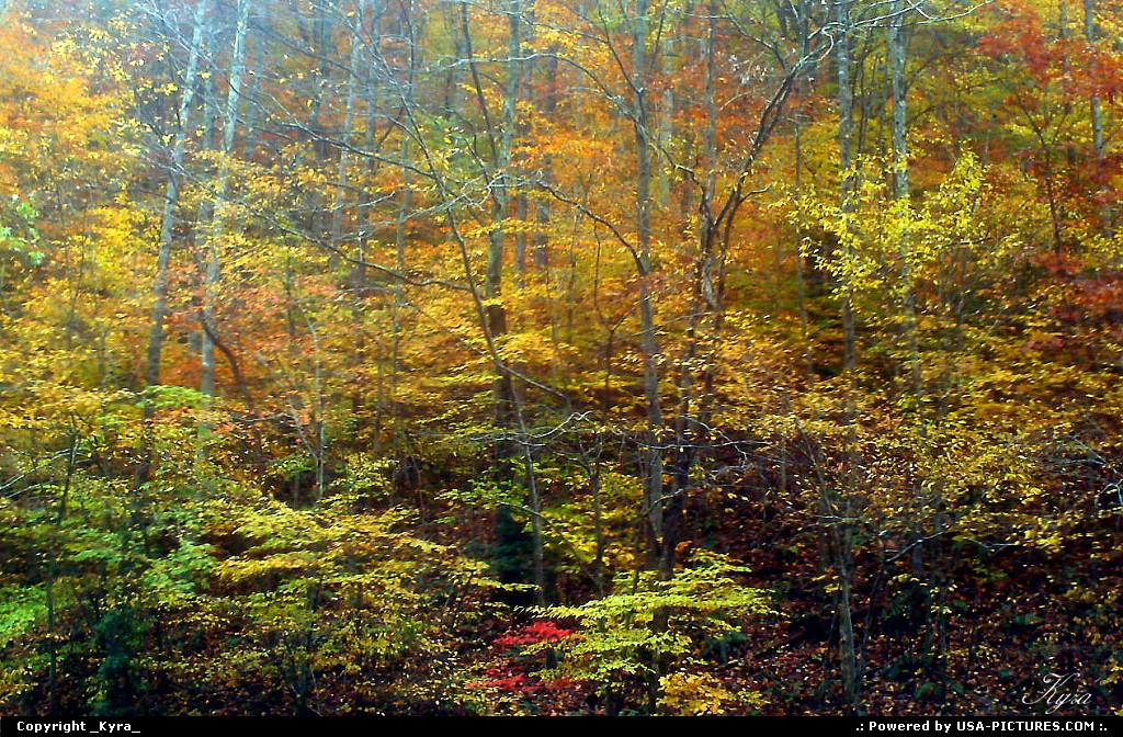 Picture by _Kyra_:LoganW-virginiaFall, mountains, autum, trees, colors