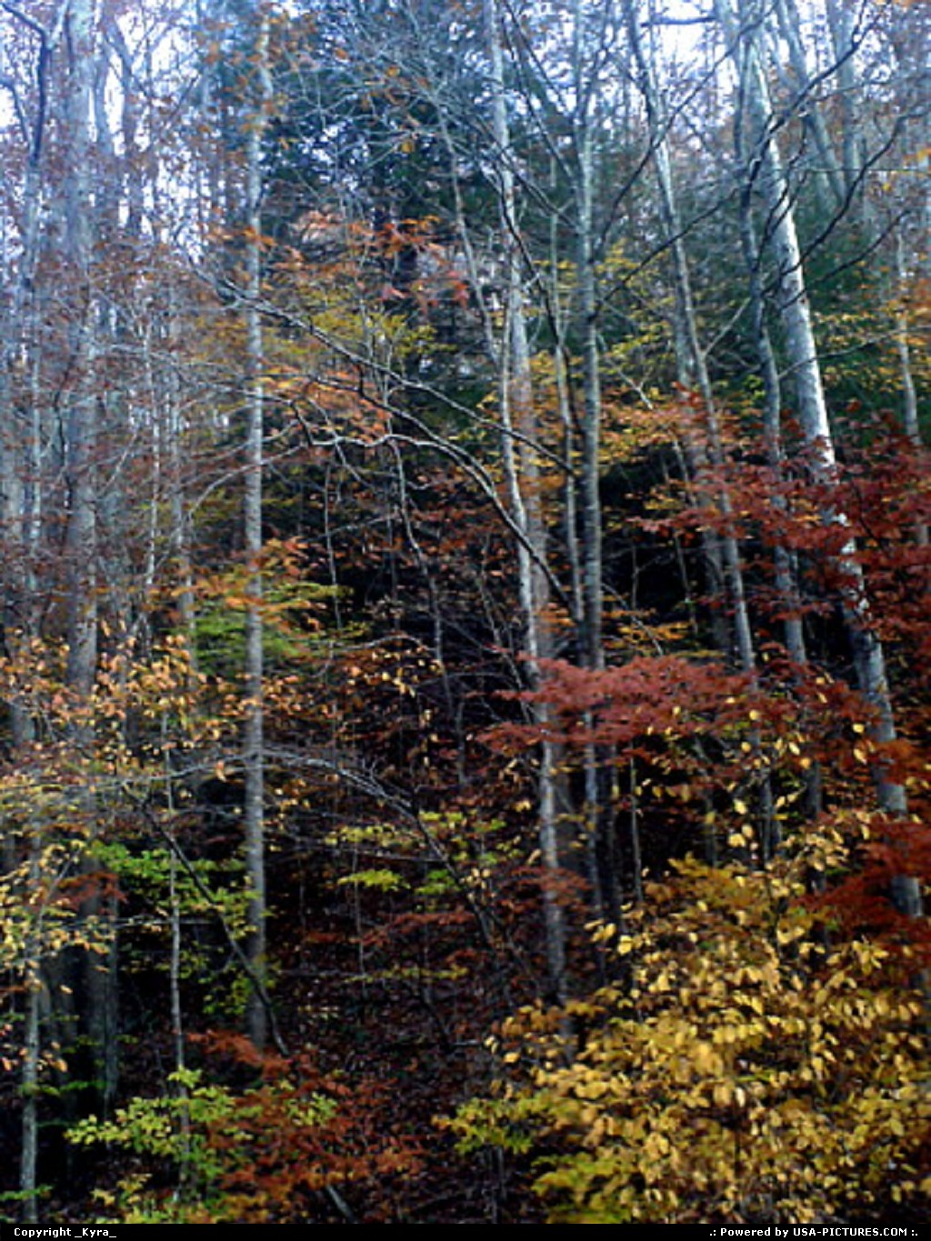Picture by _Kyra_:LoganW-virginiafall, mountains, dusk, colorful, trees, autum